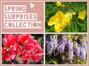 The Spring Surprises Collection