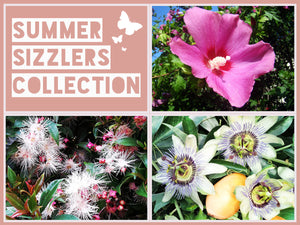 The Summer Sizzlers Collection