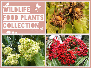The Wildlife Food Plants Collection