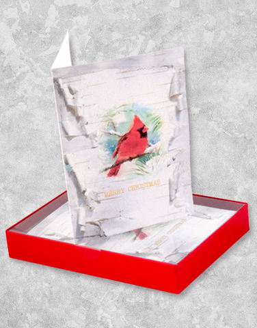 Birch Cardinal (16 Count Boxed Christmas Cards)