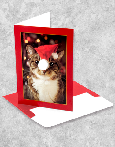 Christmas Kitty (10 Count Boxed Christmas Cards)