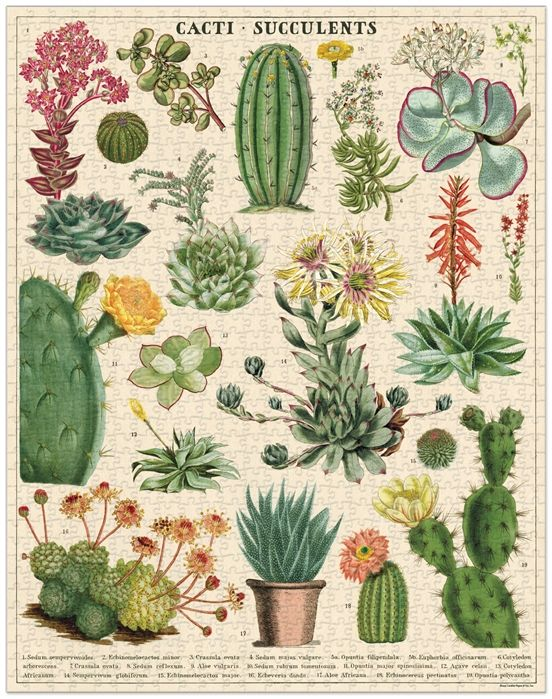 Succulents 1000 Piece Puzzle