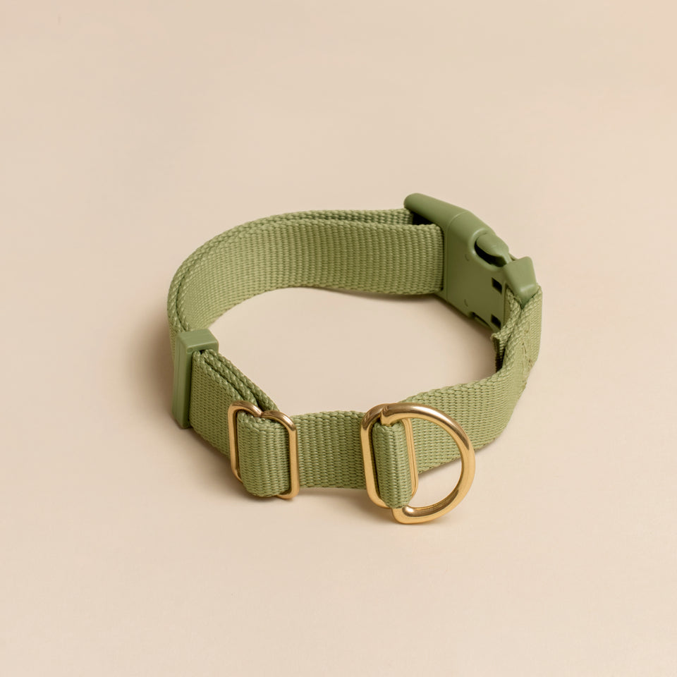 PACK COLLAR: apple