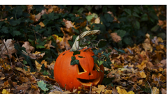 Why Halloween Can Be Good for Your Emotional Health