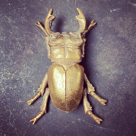 Stag Beetle Wall Art