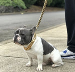 Dog Cuban Link Chain