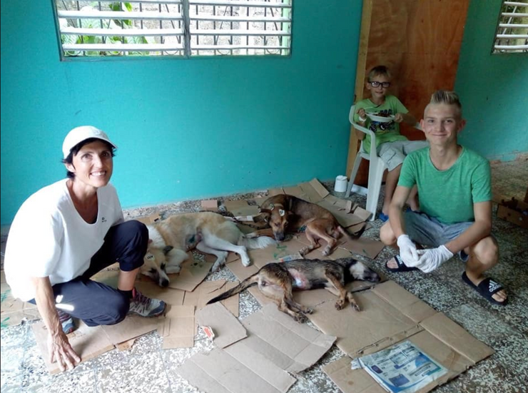 DCDR - Dogs and Cats of the Dominican Republic