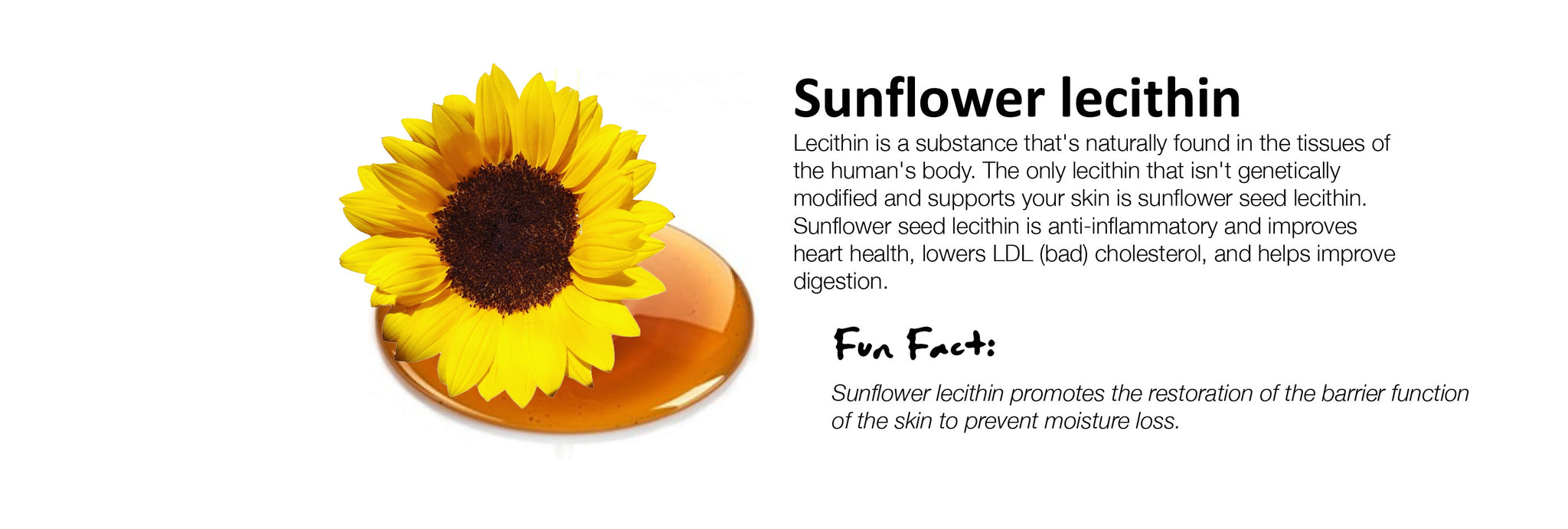 Sunflower lecithin Lecithin is a substance that's naturally found in the tissues of the human's body. The only lecithin that isn't genetically modified and supports your skin is sunflower seed lecithin. Sunflower seed lecithin is anti-inflammatory and improves heart health, lowers LDL (bad) cholesterol, and helps improve digestion.