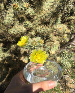 Threshold Flower Essence ~ Chaparral & Cholla