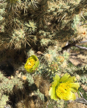 Load image into Gallery viewer, Threshold Flower Essence ~ Chaparral & Cholla