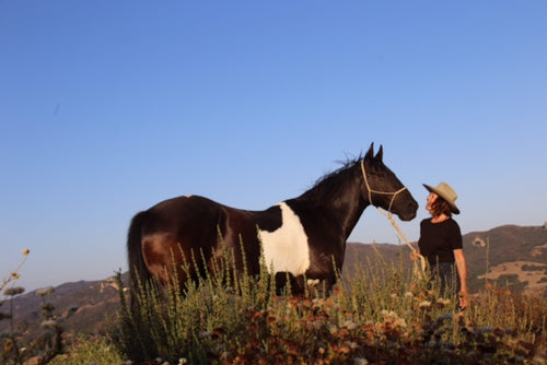 THE WILD FED HORSE PHOTO CONTEST