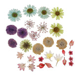 30pcs/Set Pressed Dried Ammi Majus Flower Dry Plants for Epoxy Resin Pendant Necklace Jewelry Making Craft DIY Accessories