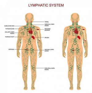 Lymphatic Drainage Ginger Oil-HOT