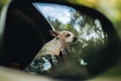 Moving With A Pet? Here's How To Make It Painless