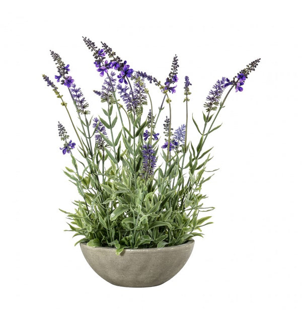 Potted Lavender Bowl