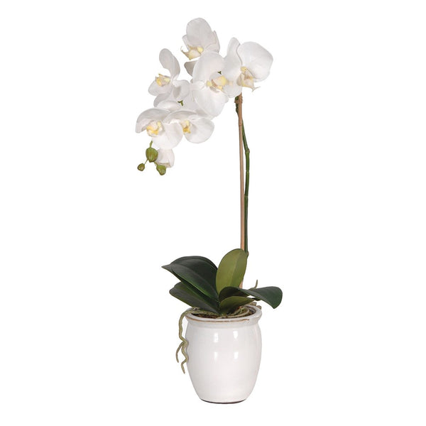 White Orchid in Glazed Pot