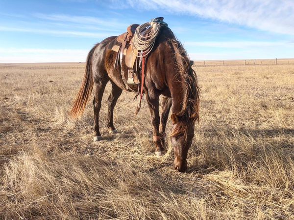 Western ranch horse