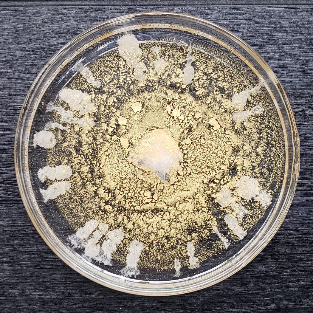 Petri Dish Series: Golden Sun