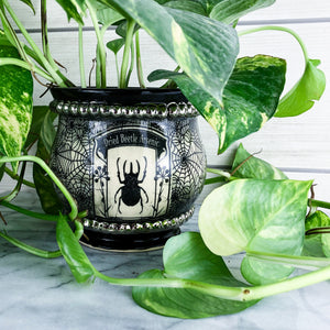 Dried Beetle Arsenic Apothecary Planter