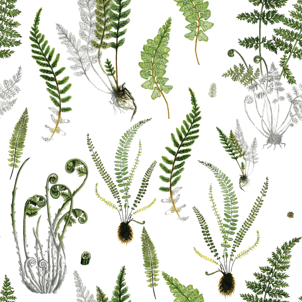 MUSE Wall Studio Ferns in White