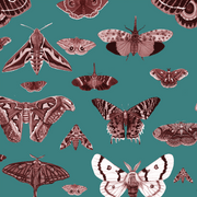 MUSE Wall Studio Moth Museum in Teal