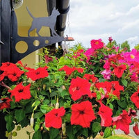 Customer photo of Cat Large Garden Bracket with hanging basket holding red flowers attached.
