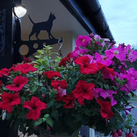 Large Cat Garden Hanging Basket Bracket. Customer photo. Solar light is on. Flory's Online. Garden Gifts.