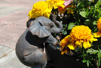 Elephant 'Pot Pal'