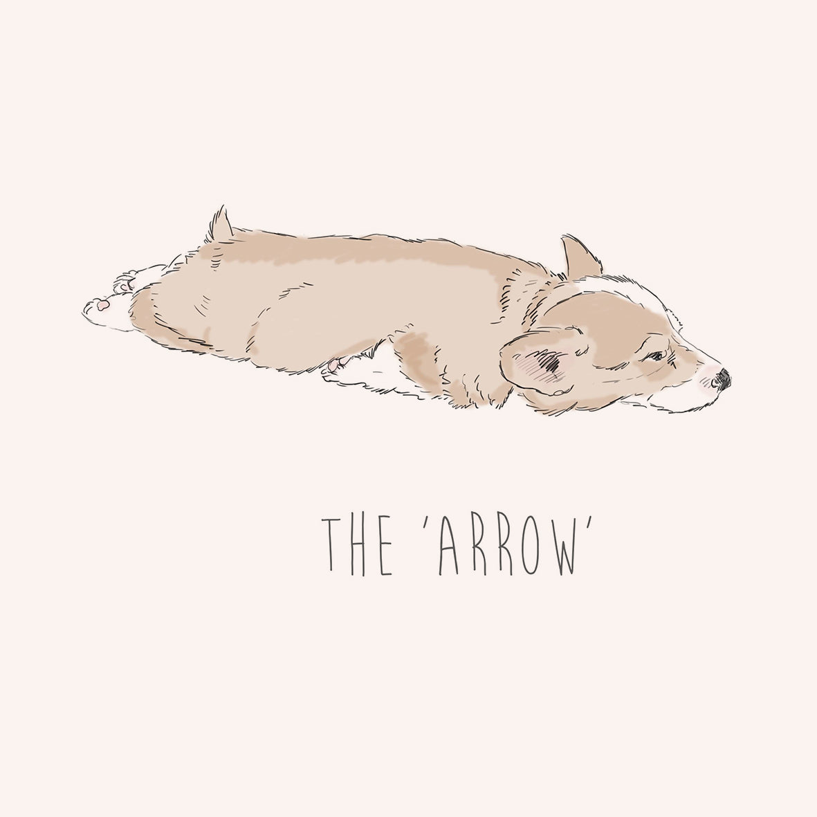 Arrow – Corgi