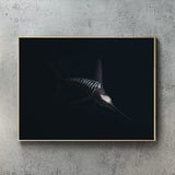 Striped Marlin Black edition
