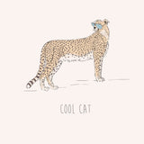 Cool Cat – Cheetah