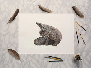 Ground Pangolin