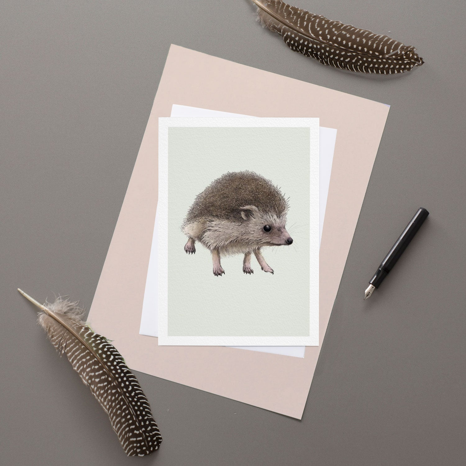 Hedgehog - Greeting Card