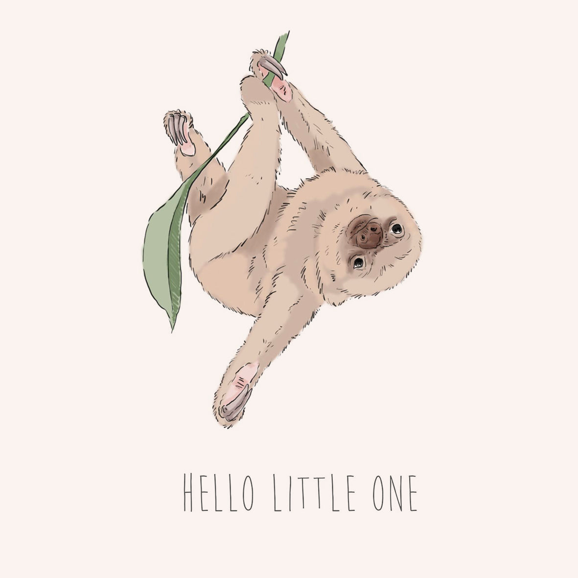 Hello Little One – Two Toed Sloth