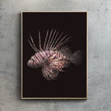 Red Lionfish - Black
