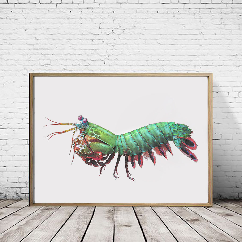 Peacock Mantis Shrimp landscape