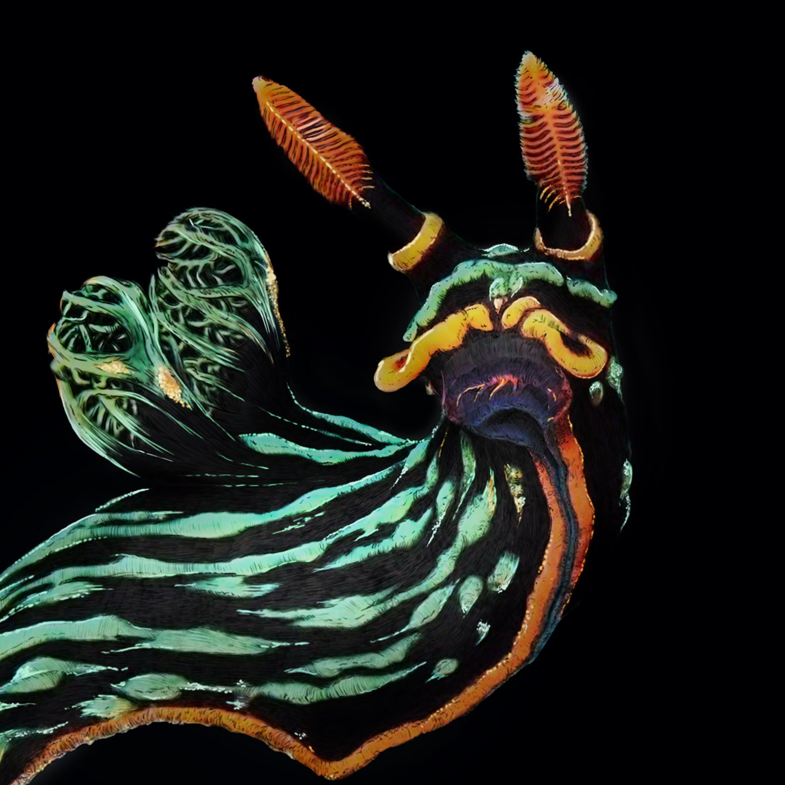 Nembrotha Nudibranch