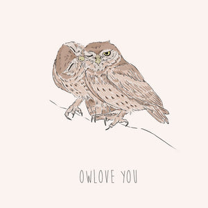 Owlove – Little Owls