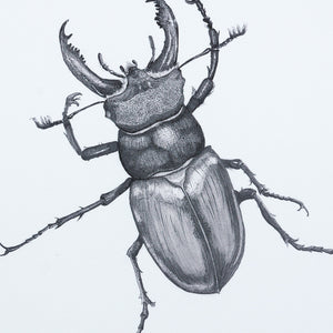 Stag Beetle black and white