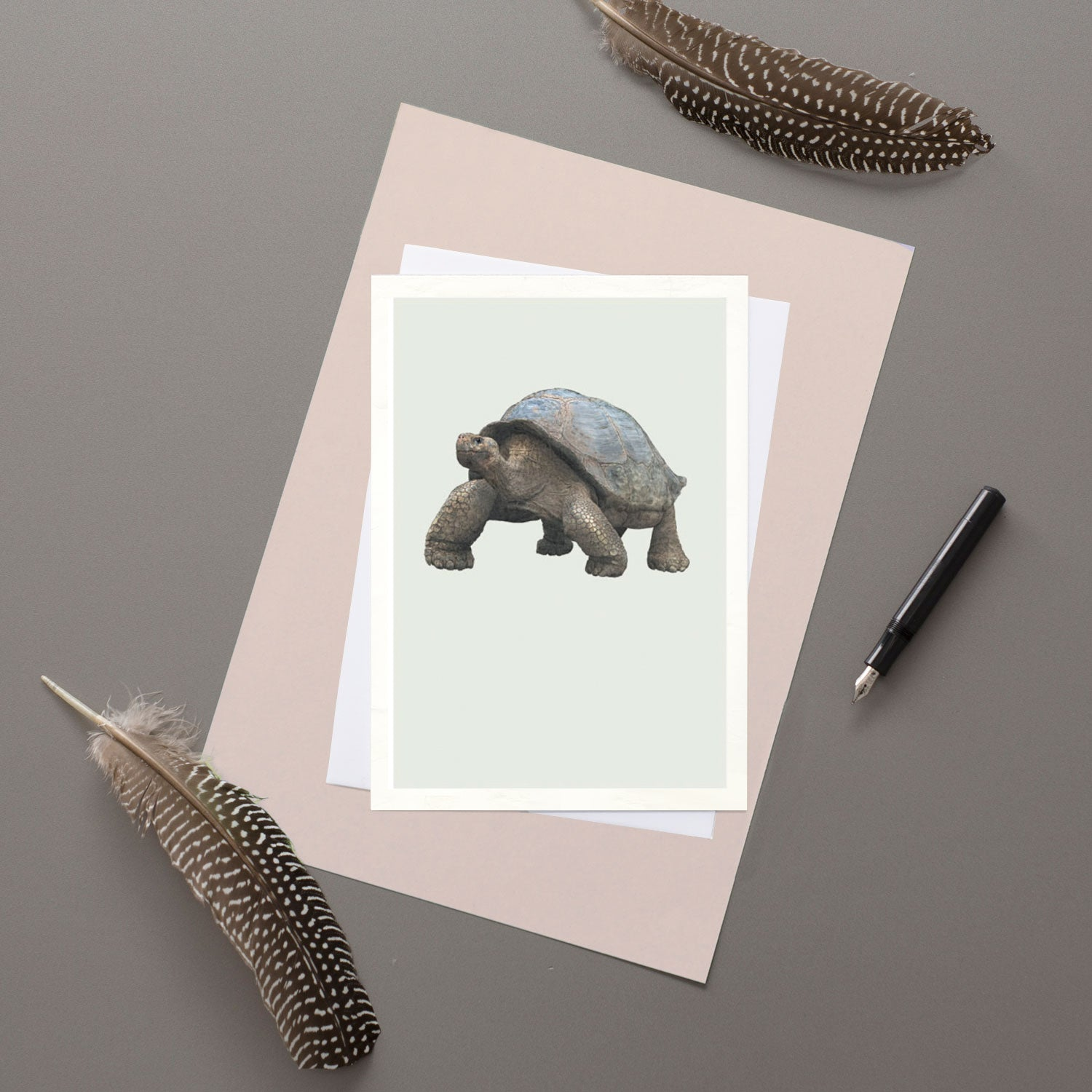 Galapagos Giant Tortoise - Greeting card