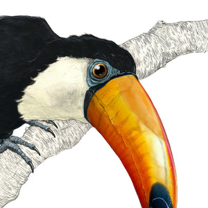 Toucan no background