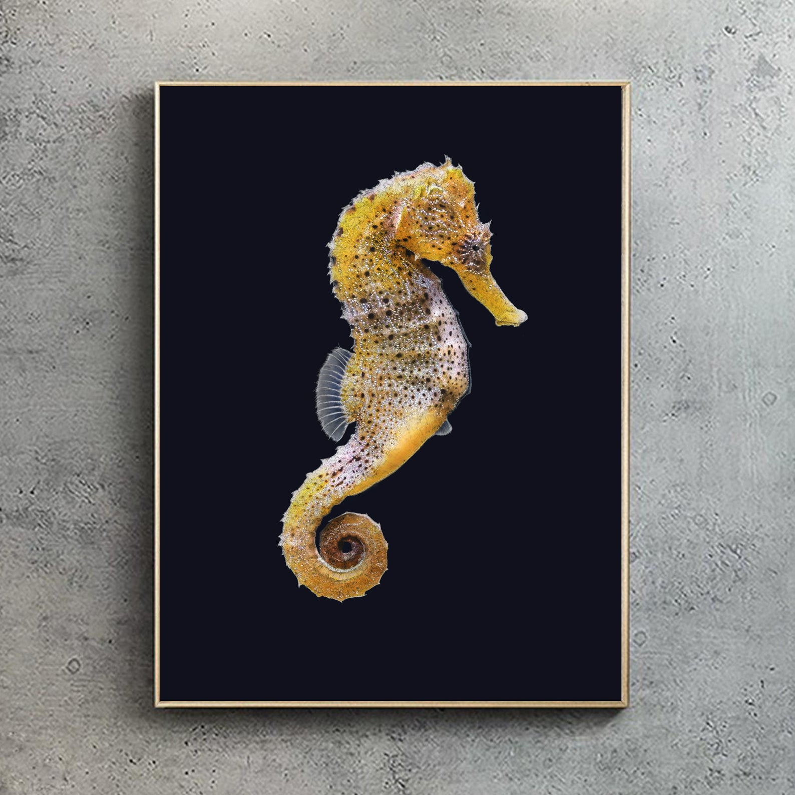 Yellow Seahorse (Artists proof)