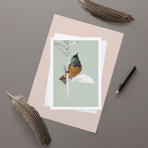 Collared Sunbird - Greeting Card