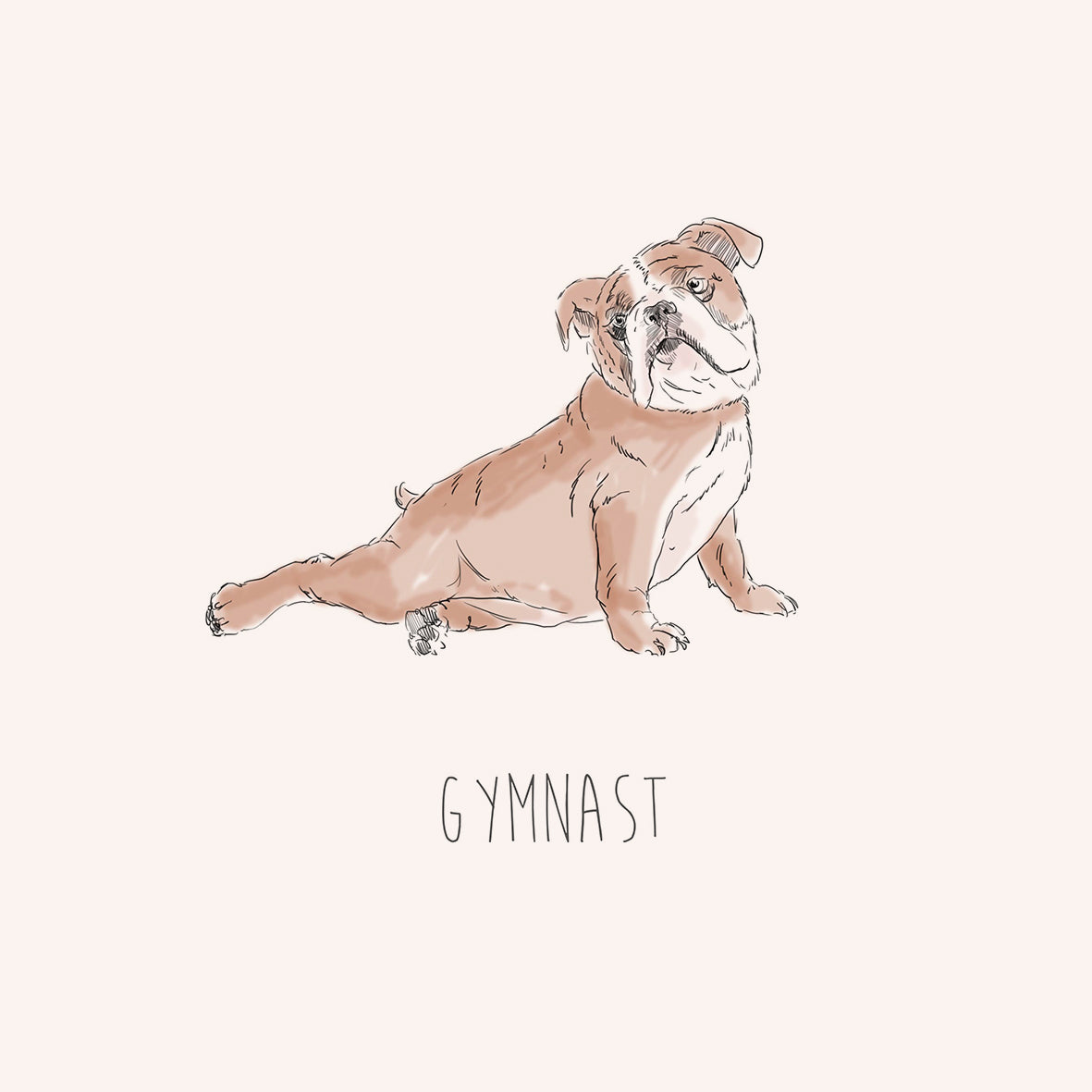 Gymnast – English Bulldog