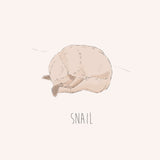 Snail – French Bulldog