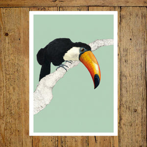 Toucan background