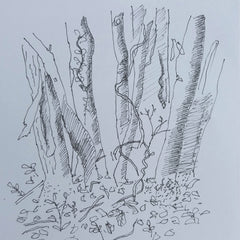 Pen sketch of tree trunks in the wood by artist mandy covington