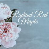 Radiant Red Maple Solo Scent