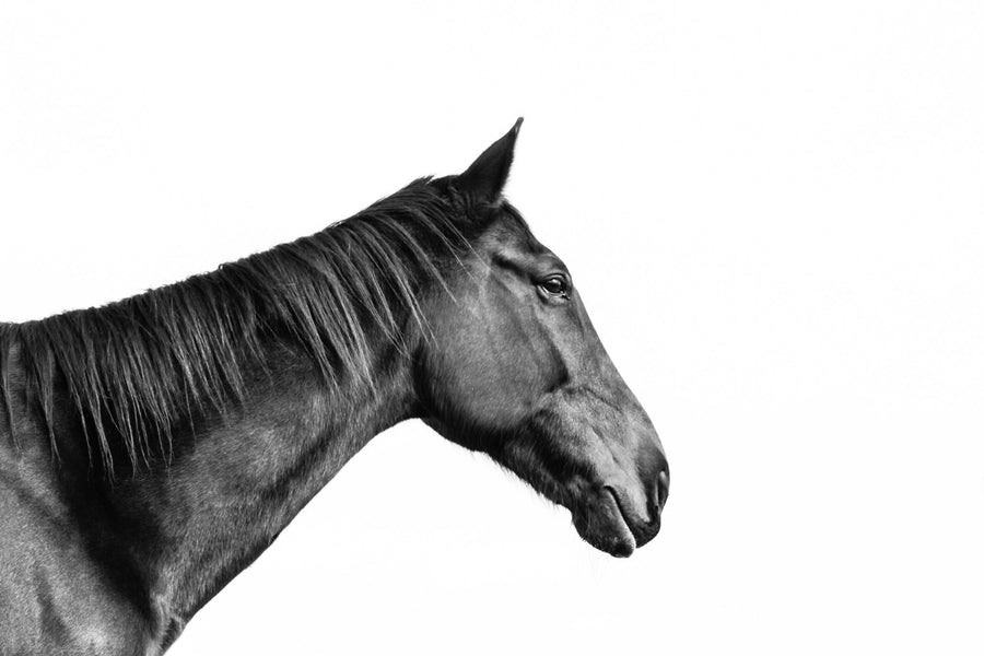 Black and white photo of horse