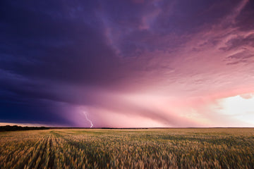 Storm and lightning over wheat crop